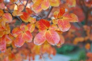 2015-11-26 fall leaves